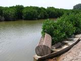 Thien Long Cave, Visit Mangrove Forest 2